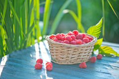 Fresh raspberry. In basket and on a table Royalty Free Stock Photo