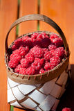 Fresh raspberry in a basket on wooden table. Sunlight Stock Images
