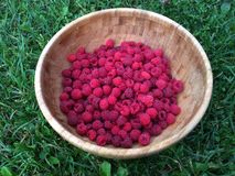 Fresh Raspberry. Berries picked in a big wooden plate Royalty Free Stock Image