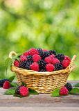 Fresh raspberry and blackberry. In the basket Stock Photos