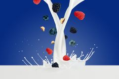 Fresh Raspberry, blueberries splashing into milk or yogurt.  Royalty Free Stock Photos