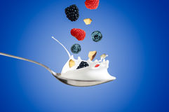 Fresh Raspberry, blueberries splashing into milk or yogurt.  Royalty Free Stock Photo