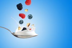 Fresh Raspberry, blueberries splashing into milk or yogurt.  Royalty Free Stock Image