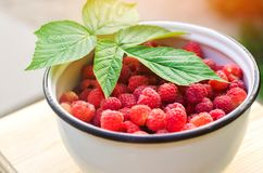 Fresh raspberry in a bowl is in the garden on a background of green grass. summer harvest. red berry. healthy food. Fresh raspberry in a bowl is in the garden Stock Photos