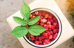 Fresh raspberry in a bowl is in the garden on a background of green grass. summer harvest. red berry. healthy food. top view. Fresh raspberry in a bowl is in Royalty Free Stock Image
