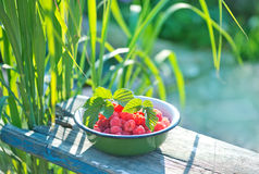Fresh raspberry. In the bowl and on a table Royalty Free Stock Photo