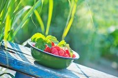 Fresh raspberry Stock Photo
