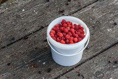Fresh raspberry in the bucket on the wooden table. Fresh and ripe raspberry in the bucket on the wooden table Royalty Free Stock Images