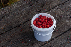 Fresh raspberry in the bucket on the wooden table. Fresh and ripe raspberry in the bucket on the weathered wooden table in garden Stock Photos