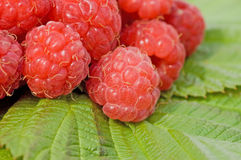 Fresh raspberry close up. Still life Royalty Free Stock Photography