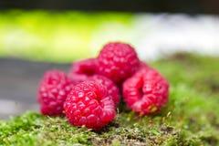 Fresh raspberry closeup. Stock Photo