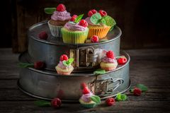 Fresh raspberry cupcake with berries and pink cream. On dark background Stock Photos