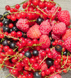 Fresh raspberry and currant. Very yummy fresh raspberry, black and red currant Royalty Free Stock Image