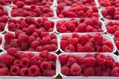 Fresh raspberry in farmers market. Red  fruit in boxes Royalty Free Stock Images