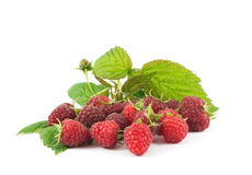 Fresh raspberry fruits. Photo Raspberry with leaves on a white background Stock Photos