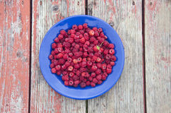 Fresh raspberry fruits on blue ceramic plate Royalty Free Stock Image