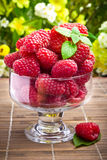 Fresh raspberry fruits in glass goblet Royalty Free Stock Photos