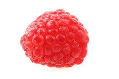 Fresh raspberry isolated. Fresh red raspberry isolated on the white background Royalty Free Stock Photos