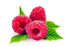 Fresh raspberry with leaf isolated on white background. Isolated raspberries. Fresh raspberry with leaf isolated on white background Royalty Free Stock Images