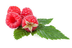 Fresh raspberry. Organic berry with green leaf isolated on white Stock Photography