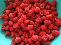 Fresh raspberry in a plastic plate royalty free stock images