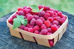 Fresh raspberry in a Raspberry basket with green leaves. The Fresh raspberry in a Raspberry basket with green leaves Royalty Free Stock Images
