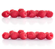 Fresh raspberry. Row from fresh raspberry with reflection over white Royalty Free Stock Photo