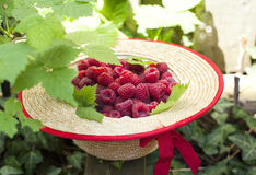 Fresh raspberry in straw hat. Fresh organic raspberry in straw hat Royalty Free Stock Photo