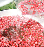 Fresh raspberry in water. Fresh pink raspberry bathe in water Stock Photography