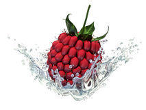 Fresh raspberry in water splash, isolated on white background Royalty Free Stock Photos