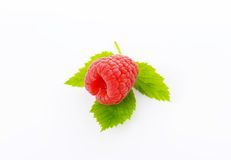 Fresh raspberry on white background. Fresh raspberry with leaves on white background Royalty Free Stock Images