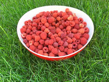 Fresh raspberry in a white plate. On green grass, summer time Royalty Free Stock Photos