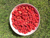 Fresh raspberry in a white plate. On green grass, summer time Stock Photo