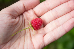 Fresh raspberry on woman hand stock photography