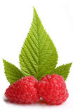 Fresh raspberrys. In front of raspberry leaf Royalty Free Stock Photos