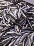 Fresh raw anchovies at fish market. Fresh raw anchovies for sale at the fish market Stock Photography