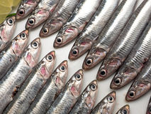 Fresh and raw anchovies. Fresh and raw mediterranean anchovy Royalty Free Stock Photo
