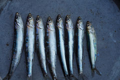 Fresh raw anchovy. Fresh anchovy in a dark iron pan, background Royalty Free Stock Image