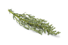 Fresh raw annual Sea blite. Fresh raw salty annual Sea blite on white background Royalty Free Stock Photo
