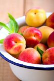 Fresh raw apricots. In a bowl Stock Image