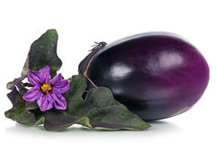 Fresh raw aubergine. Fresh aubergine with blossom and leaves isolated over white background Royalty Free Stock Photos