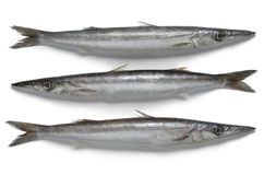Fresh raw barracuda fish. On white background Stock Photos