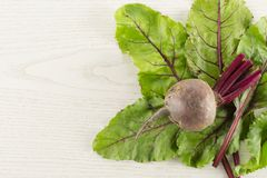 Fresh raw Beetroot isolated on grey wood. Red beet young bulb with greens flatlay isolated on grey wood background top view fan of fresh leaves Stock Photos