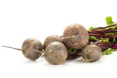 Fresh raw Beetroot isolated isolated on white. Red beet bundle with greens isolated on white background five bulbs root with fresh leaves Royalty Free Stock Image