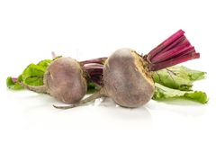 Fresh raw Beetroot isolated isolated on white. Red beet with cut tops two young bulbs and green leaves isolated on white background Royalty Free Stock Photos