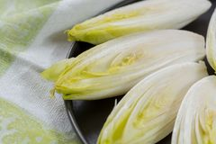 Fresh raw Belgian bitter chicory salad ready to cook. Close up Royalty Free Stock Photos