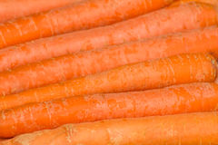 Fresh, raw, bio carrots. Fresh, raw, organic, bio, orange carrots. Healthy vegan vegetarian vegetable food Stock Images