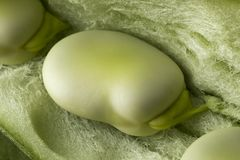 Fresh raw broad bean inside the pod. Close up full frame Stock Images