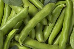 Fresh raw broad beans in the pod. Close up full frame Stock Photography