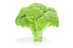 Fresh raw broccoli. Broccoli floret isolated on a white background cutout Royalty Free Stock Photography